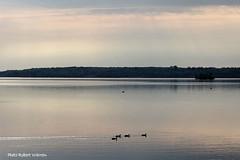 Le calme du matin... / Peaceful morning... (Pentax_clic) Tags: morning bird landscape spring pentax quebec may mai paysage printemps oiseau matin kx vaudreuil robertwarren