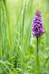 Coloured Spot (StrauSeba) Tags: pink grass sommer natur pflanze pflanzen rosa blumen lila gras nah blume