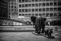 Mother to all Elephants (Ben Roffelsen Photography) Tags: sculpture toronto elephant downtown district financial blogto torontoist nikkor28300mm nikond7100