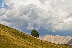 Passo Oclini (MilleLuci) Tags: blue cloud sun mountain tree verde green field stone cow nuvole alone cows wind cloudy centro solo sole roccia albero mucca alto azzurro prato montagna trentino vento altoadige adige mucche latemar nuvoloso