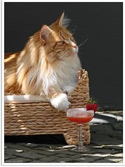Cocktailzeit - time for a cocktail