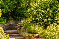 BF-1 (AZDenney) Tags: gardens publicgardens conservatories arboretums