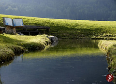 quelle (bornschein) Tags: life wood trees light green nature water peace gras