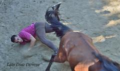 Rapa das Bestas no Curro de San Ramn (Luis Diaz Devesa) Tags: espaa horse caballos spain europa galicia galiza pontevedra crines rapadasbestas montecastrove luisdiazdevesa baixadadoscabalos aexcusa