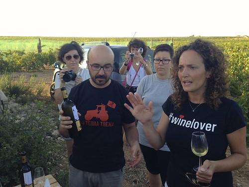 Vignammare, Nino Barraco vineyard