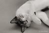 mode:romp (susodediego ) Tags: chat gato katze gatto blackdiamond autofocus lúa кошка γάτα thegalaxy frameit nikkorafs70200mmf28vr nikond300 gününeniyisi gününeniyis mygearandme ringexcellence rememberthatmomentlevel1 magicmomentsinyourlife rememberthatmomentlevel2 rememberthatmomentlevel3 frameitl2 vpul01