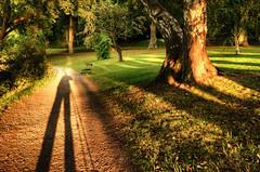 The Long Shadow (henriksundholm.com) Tags: trees sunset shadow selfportrait grass bench landscape photographer shadows sundown bend sweden stockholm tripod birch sverige backlit curve hdr gravel birches manfrotto djurgrden
