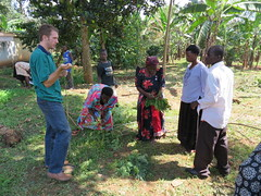 IMG_0245 (Horticulture Innovation Lab) Tags: ps trellis uganda ucdavis danq trellis2013