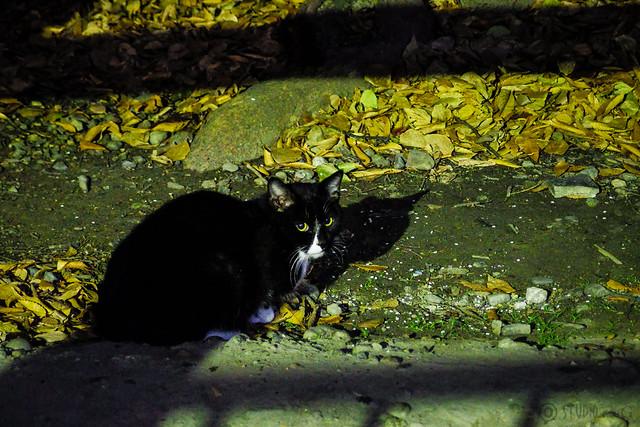 Today's Cat@2013-12-18
