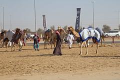 Kamelmarkt irgendwo in der Wüste (Christian Jena) Tags: der wüste irgendwo kamelmarkt