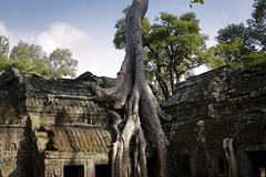 _MG_9900 (Tam Church) Tags: old city building tree spectacular temple ancient rocks cambodia temples siem reap civilization angkor wat