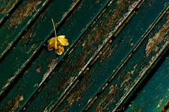 Golden Leaf (Guild of Mute Assassins C!) Tags: old green lines yellow jaune bench leaf vert antwerp antwerpen banc feuilles anvers vieux lignes smcpfa50mmf14 smcpentaxfa50mmf14 smcfa50mmf14 havencentrumlillo
