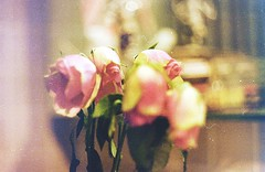 unlovable - 35mm Zenit TTL (Stefano☆Majno) Tags: roses film 35mm sadness lomo 4 100 zenit ttl 55 expired stefano helios pellicola analogico unlovable majno