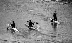 Face to face (Csaba Csorba) Tags: portrait bw motion art river dark nikon europe hungary kayak shadows budapest perspective canoe canoeing nikkor facetoface canoeist buda pest d7100 dunariver