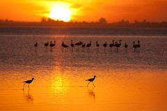 Melincue fauna (Esteban P Sabadotto) Tags: sunset orange lake santafe sol birds fauna atardecer agua wildlife pajaros laguna naranja flamenco melincue