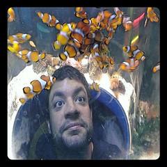 Fishies! (Ilana Smith) Tags: ian phonecamera