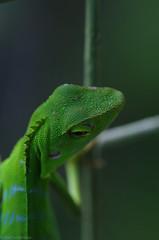lizard on the fence3