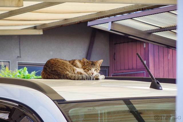 Today's Cat@2014-05-11