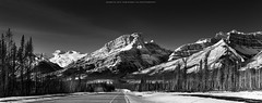 Canadian Rockies in Winter (Ding Ying Xu) Tags: winter panorama landscape banff canadianrockies