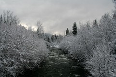 East Fork Hood River (bulldog008) Tags: park bridge trees winter white snow cold tree nature wet water oregon forest river season landscape outside flow outdoors stream frost day seasonal fork east cover toll hood icy snowfall tollbridge