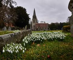 Welford Park, Newbury - Feb '15 (Andy (oldster)) Tags: church snowdrops newbury stgregorys nex welford saintgregorys sonyalpha stgregoryschurch a6000 ilce6000
