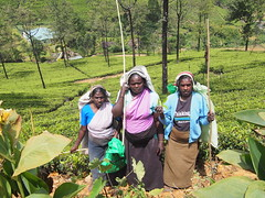 Met these tea picking ladies in the highlands who made 4 US dollars a day working 12 hours shifts!