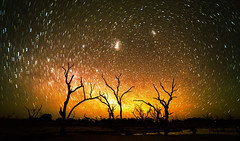 Dancing with the stars (Young Ko) Tags: longexposure travel trees light sky holiday texture nature yellow rock night composition stars landscape interesting nikon awesome atmosphere australia galaxy nsw lonely nightsky minimalism milkyway astrophotograph dancingwiththestars menindeelake milkywayphotography