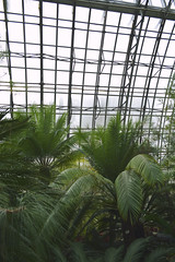Palm trees in a cage (mariiasparkles17) Tags: plants white tree green nature leaves st garden botanical petersburg structure palm greenhouse exotica