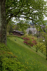 IMG_6012- (Reietto) Tags: bear sky panorama rose clouds swisse nuvole cloudy panoramas baren bern svizzera rosengarten stich orsi orso berna swizerland graben nubi barengraben tamronsp1750f28 giardinodellerose canoneos7d cristiancarbini16 bern2016
