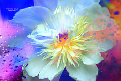 inner flow (mariola aga) Tags: abstract flower art colors mix bright pastel peony filters blending thegalaxy