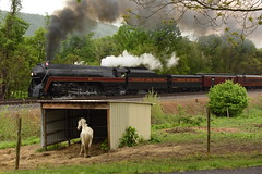 NW 611 in Horse Country (Rudy - rufec12) Tags: ranch horses rain train virginia nw power farm norfolk engine trains scene steam va engines western locomotive railfan 611 railfanning