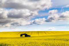 Fields of Gold (Jerry Fryer) Tags: blue yellow clouds landscape canola rapeseed 6d ef24105mmf4l lee6ndhard leelandscapepolarizer