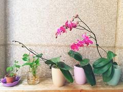 #flower #elho (Mg Lin) Tags: flower elho