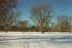 Footprints (Phil Roeder) Tags: leica trees winter snow film bluesky iowa waterworks desmoines leicaflex kodakfilm kodakportra400 leicaflexsl elmaritr35mmf28 elmaritrf2835mm