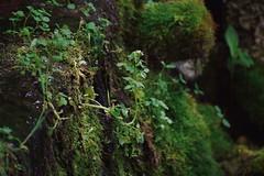 (enowak30) Tags: plants green nature outdoors photography moss hike