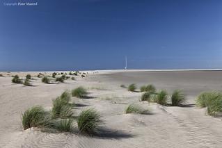 The Dutch Desert
