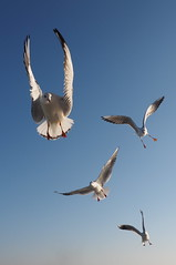 (KEI #) Tags: sky bird digital zuiko f28    m43   1240mm   microfourthird mzuiko olympusomdem5micro fourthirdm43