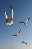 "0087 (KEI #) Tags: sky bird digital zuiko f28 有明海 かもめ 写真 m43 熊本県 デジタル 1240mm 長洲港 有明フェリー microfourthird mzuiko olympus omd em5 ""micro fourthird"" m43 オリンパス 玉名郡長洲町"
