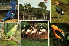 Avifauna (Steenvoorde Leen - 1.8 ml views) Tags: holland de cards 1971 karte card parc rijn aan avifauna birdpark postkarte ansichtkaart vogelpark alphen postkaart rederij diseaux