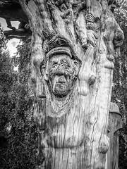Baumstammgesicht (tomac_foto) Tags: tree gesicht natur uni monochrom baum baumstamm schnitzerei 2015 einfarbig schwarzweis baumgesicht