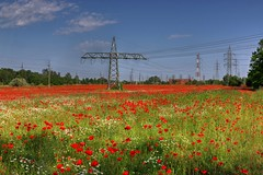 Ponceau field (Majorimi) Tags: blue red sky flower color colour tree green industry nature beautiful field grass digital canon eos nice wire flora colorful hungary calm pole poppy electricity hdr ponceau 70d