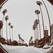 Palm Trees [Los Angeles]