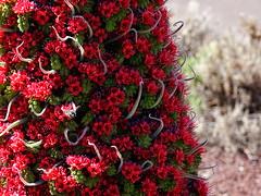 RED! (Adventures of KM&G-Morris) Tags: travel cruise volcano tour worldheritagesite bee tenerife canaryislands teidi teiditowerofjewels