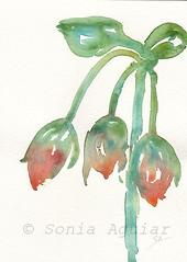 Brotes 2 (Sonia Aguiar (Mallorca)) Tags: acuarela art brotes nopencil watercolor watercolour originalartwork aquarell colorespastel fondoblanco soniaaguiar