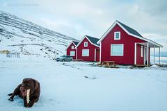 10.Eskifjordur ( / ELIX) Tags: volunteering 2016    elixconservationvolunteersgreece