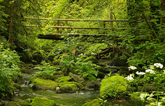 Black Forrest - walking through (Hiheinz) Tags: farn fern forrest landscape nature