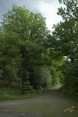 Testtur med ombyggd cykel #3 (George The Photographer) Tags: abandoned berg se sweden mountainbike mtb ek sten bom cykel moln mulet naturreservat grnt grov grusvg skmoln regnigt lvtrd vgskl johannesdal ing1 almns jttesten militromrde tobcken