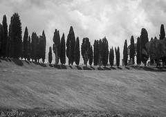 CRW_7517-1 (03TTAM) Tags: bw landscape toscana paesaggi viafrancigena