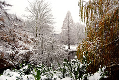 Schnee auf Bäumen. (Aaron T Jones) Tags: wood city winter urban snow tree nature weather forest germany deutschland town nikon outdoor nordrheinwestfalen lakepark d60 recklinghausen northrhinewestphalia