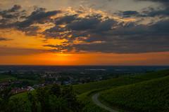 Sunset Vines (M.Schreiber) Tags: sunset sun clouds town vines dorf hill wolken berge stadt grapes sonne reben trauben rebland